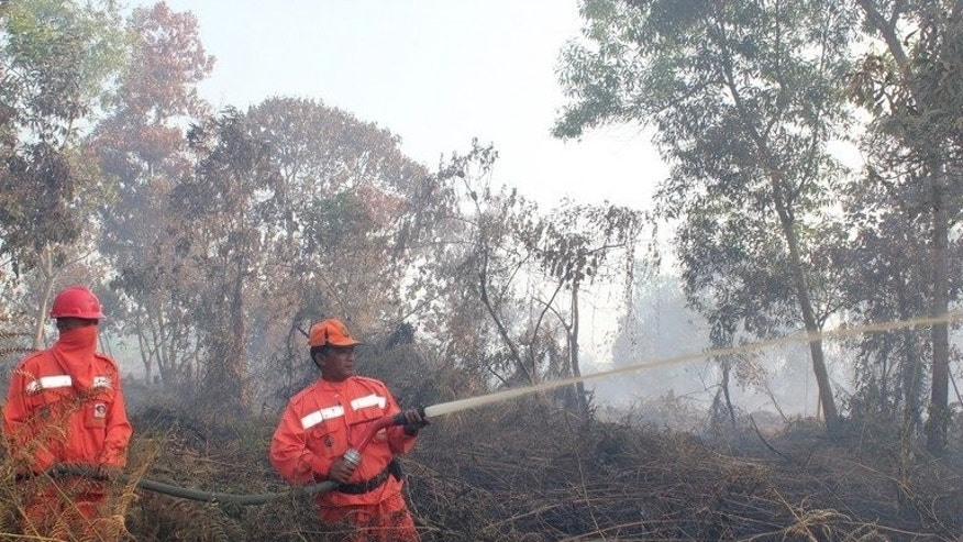 Indonesian firefighters from the Forest Ministry battle forest fires in Pekanbaru city, capital of Riau province, on Sumatra island, and about 320 km west of Singapore, on June 20, 2013. Indonesia on Friday dispatched helicopters to create artificial rain in a desperate bid to fight raging fires that have choked Singapore, as smog cloaking the city-state hit record-breaking levels.