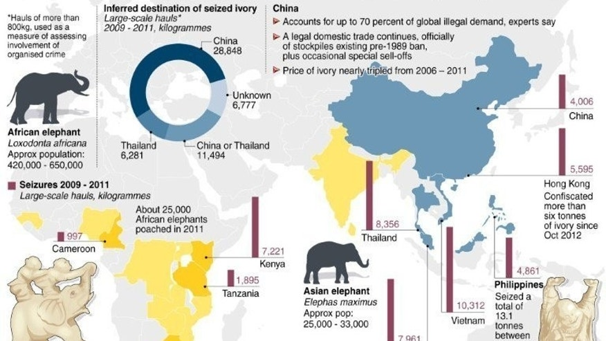 Graphic on the global contraband in Elephant ivory