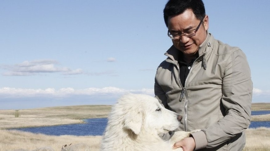 "Andy Hu plays with his dog as he inspects sheep on his farm in Ogema, Saskatchewan, May 24, 2013. His plan is to turn it into the biggest in Canada in ""2 or 3 years"" and to export the meat to China."
