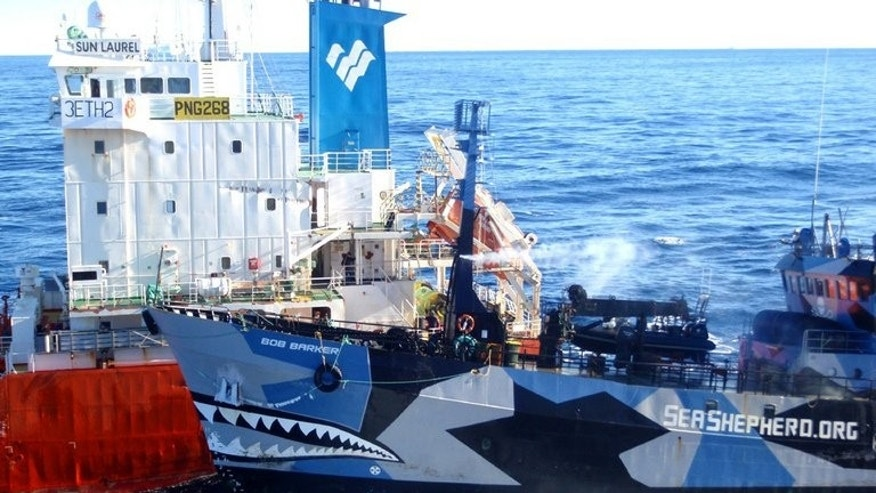 Sea Shepherd ship Bob Barker (R) collides with the San Laurel, part of the Japanese whaling fleet, off Antarctica on February 26, 2013. Whalers came back with just 103 Antarctic minke whales, less than half its tally last year, after repeatedly clashing with Sea Shepherd.