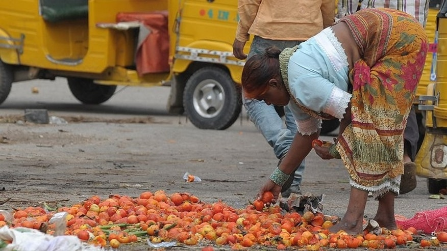 A woman collects spoilt tomatoes discarded by vendors at a vegetable wholesale market in Hyderabad on June 12. India's multi-billion-dollar food welfare programme is the largest in the world, offering subsidised grains to nearly 70% of the population, or more than 800 mn people.