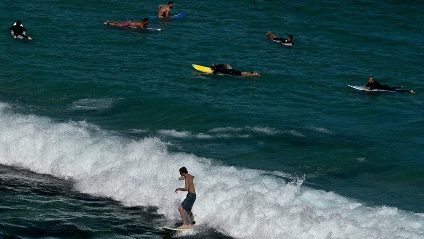 Surfers hit the waves at the popular Bondi beach in Sydney, on January 4, 2013. A local surfer had a lucky escape on Sunday when he was hit by a whale frolicking off Bondi and knocked unconscious.