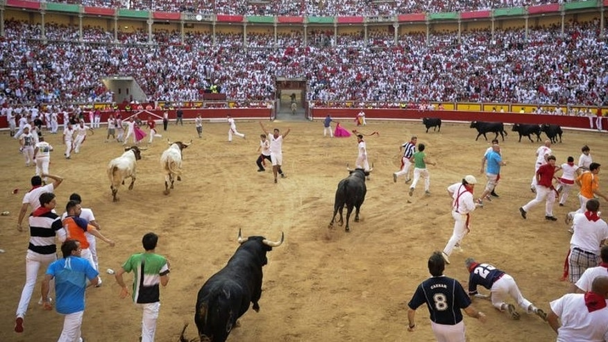 Bulls enter the arena at the San Fermin Festival in Pamplona, northern Spain, on July 8, 2013. Half-tonne fighting bulls knocked over thrill-seekers in a fast, adrenaline-fueled chase that left four injured at the annual event.