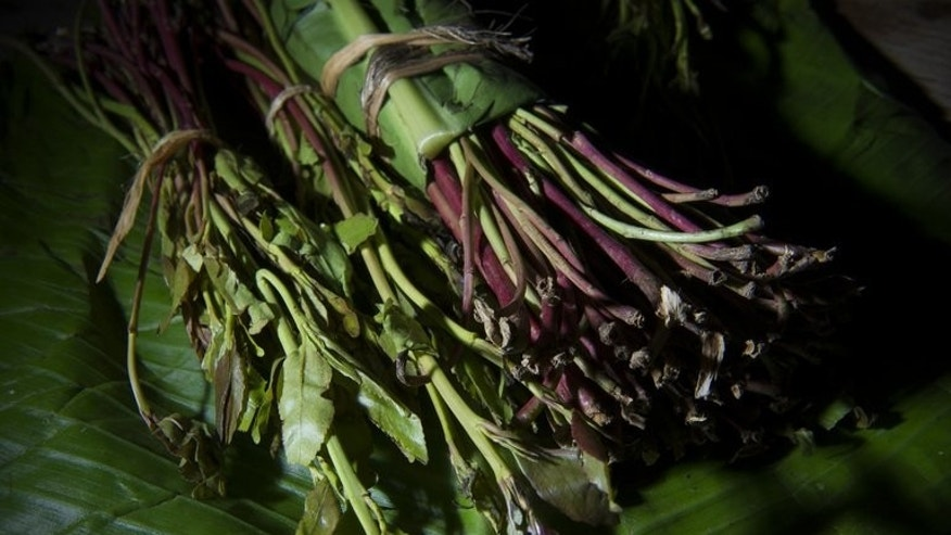 A picture shows a bundle of khat (qat) in London on February 28, 2013. Angry Kenyan farmers growing the stimulant khat, a crop branded a drug and banned by Britain, demanded Monday that British army training bases and British-owned farms be shut down in retaliation for the ban.