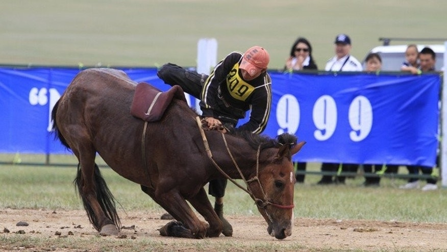 A Mongolian youngster falls off his horse during a race at the annual Naadam festival in Ulan Bator on July 12, 2012. Horses are at the core of Mongolian culture -- there are dozens of words for the colours of an equine coat, and children learn to ride almost as soon as they can walk.