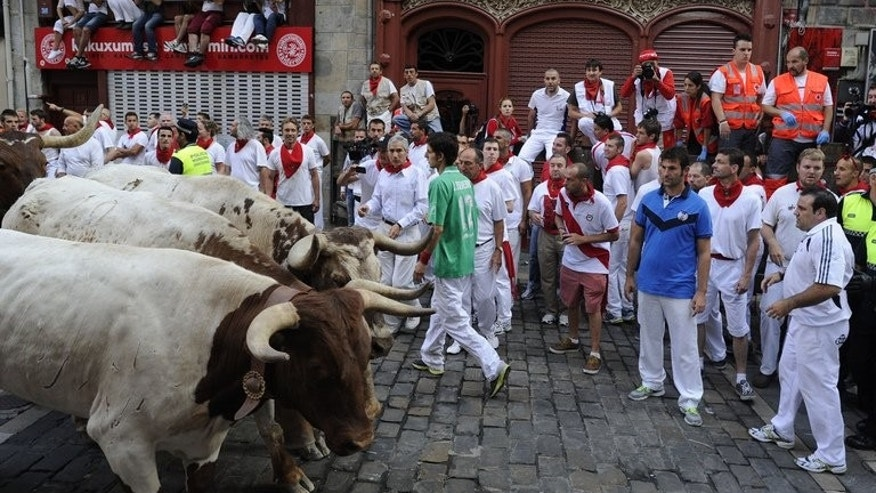Participants inspect the bulls ahead of the San Fermin Festival in Pamplona, northern Spain, on July 11, 2013. Hundreds of daredevils tested their bravery by fleeing half-tonne fighting bulls through the winding streets of Pamplona in a run that sent two men to hospital.