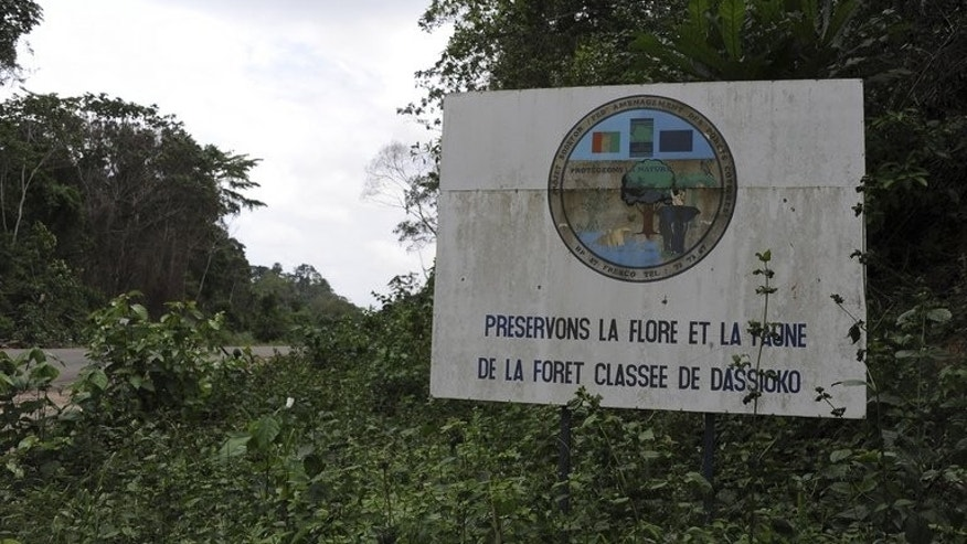 A placard reading 'Preserve Niegre forest's fauna and flora,' seen on June 23, 2013. The Ivorian government sent troops and buldozers to reclaim the forest in southwestern Ivory Coast, leaving thousands of farmers, who had been illegally exploiting the land for years, without work and without homes after they razed Baleko-Niegre village.