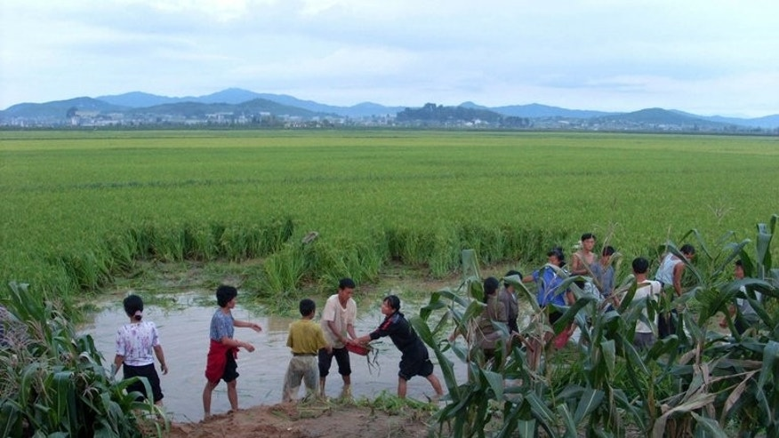 This file photo, released by North Korean Central News Agency on September 10, 2010, shows North Korean farmers working in the fields flooded by torrential rains after a typhoon at Sukchon county in South Pyonan province. Poor weather makes it harder for the communist state to feed its 24-million-strong population as it lacks advanced agricultural technology and infrastructure.