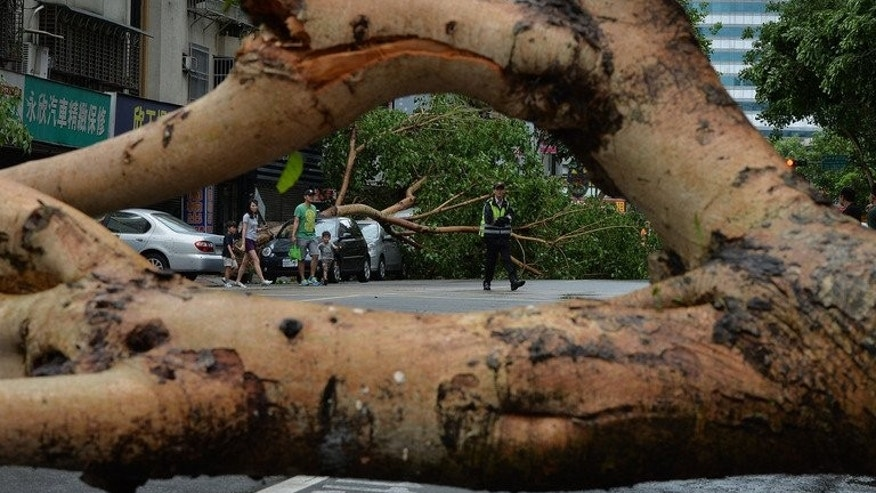Vehicles damaged by fallen trees after Typhoon Soulik hit Taipei, on July 13, 2013. China has evacuated more than 300,000 people and drafted in thousands of soldiers as a typhoon which brought torrential rain and powerful winds to Taiwan began to batter the mainland.
