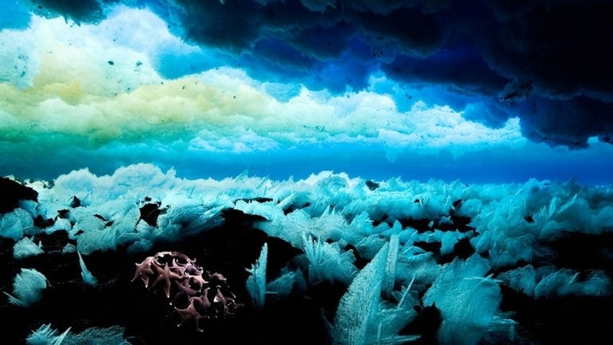 The sea floor in Antarctic waters, shown in a photo released on November 1, 2011 by the Antarctic Ocean Alliance. Russia on Tuesday blocked attempts by Western countries to create the world's largest ocean sanctuary off Antarctica, green groups said.