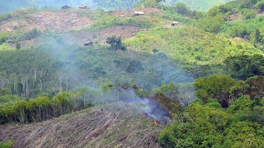 An area of forest being is burned down in the village of Ned near Blit in the Philippines on August 9, 2009. The United States will help preserve the Philippines' rapidly vanishing tropical rainforests under a $31.8-million debt-to-aid conversion signed in Manila, the two governments said.