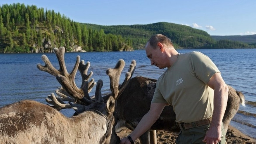 Vladimir Putin feeds deer last weekend during a holiday visit to in the Tyva region. The Russian leader took part on Saturday in a prayer service in central Kiev, the first item on Putin's agenda bulging with events designed to play up historic ties between the two majority Orthodox nations.