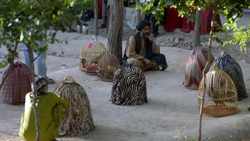 Partridge sellers wait for customers at a park in Kabul, on July 5, 2013. Partridges can sell for several thousands of dollars -- a fortune in a country where one in three people live in poverty.
