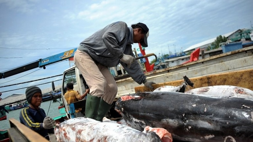 Carcasses of finless sharks are being unloaded from a fishing boat in the port of Benoa on the resort island of Bali, on February 25, 2013. Indonesia and India on Tuesday were named as the world's biggest catchers of sharks in an EU-backed probe into implementing a new pact to protect seven threatened species of sharks and rays.