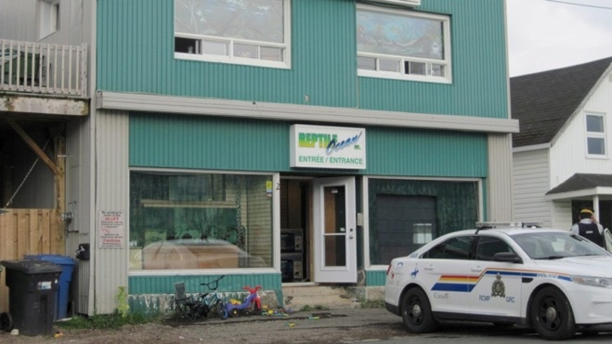 Aug. 5, 2013: In this photo, Royal Canadian Mounted Police work at the scene of a fatal python attack at Reptile Ocean exotic pet store in Campbellton, New Brunswick. Two young boys were killed by a python snake as they slept in an apartment above the store.