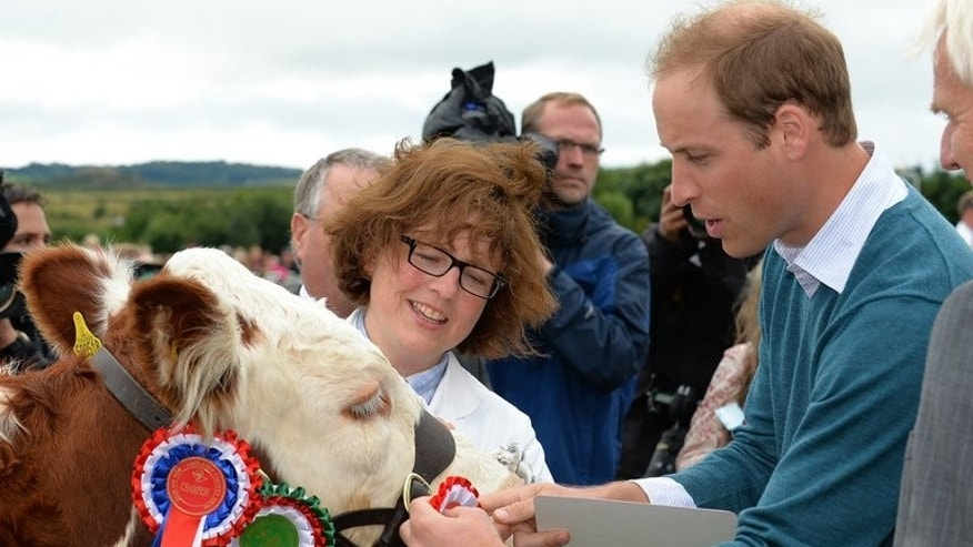 "Britain's Prince William (right) awards a rosette as he visits the Anglesey Show in North Wales on August 14, 2013. The Prince said he is to leave his home on the Welsh island of Anglesey when his posting with the Royal Air Force finishes next month and move ""elsewhere"" with his wife and their newborn son."