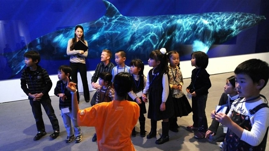 A life-sized photograph of a dwarf minke whale is displayed behind children at an exhibition in Tokyo on December 8, 2010. Dwarf minke whales have been tagged and tracked in the Great Barrier Reef in a world-first pilot study which hopes to solve the mystery of where they spend the summer.