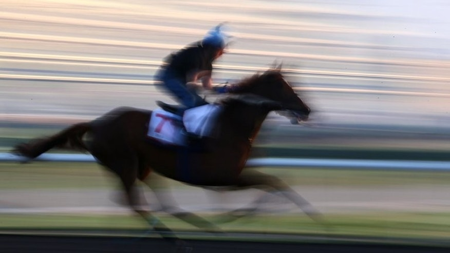 This file illustration photo shows a jockey riding a horse during a training session, on March 28, 2013. A 25-year-old New Zealand man died after falling from his horse during horse trials in northern England on Sunday, according to Equestrian Sports New Zealand (ESNZ).