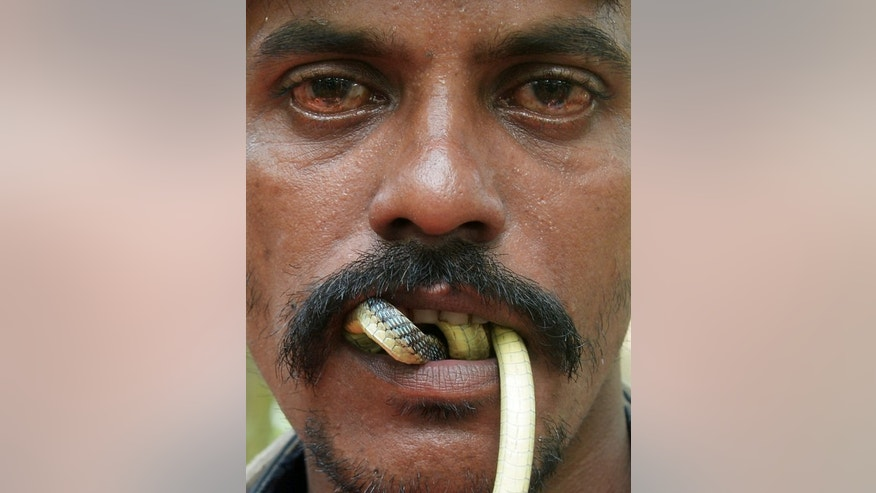An Indian snake charmer performs with a 'gokhra' - cobra - in his mouth for passers by at a snake fair at Purba Bishnupur village, around 85 kms north of Kolkata on August 17, 2013. Hundreds of people queued in a remote village in eastern India over the weekend to receive blessings from metres-long and potentially deadly snakes, thought to bring them good luck.