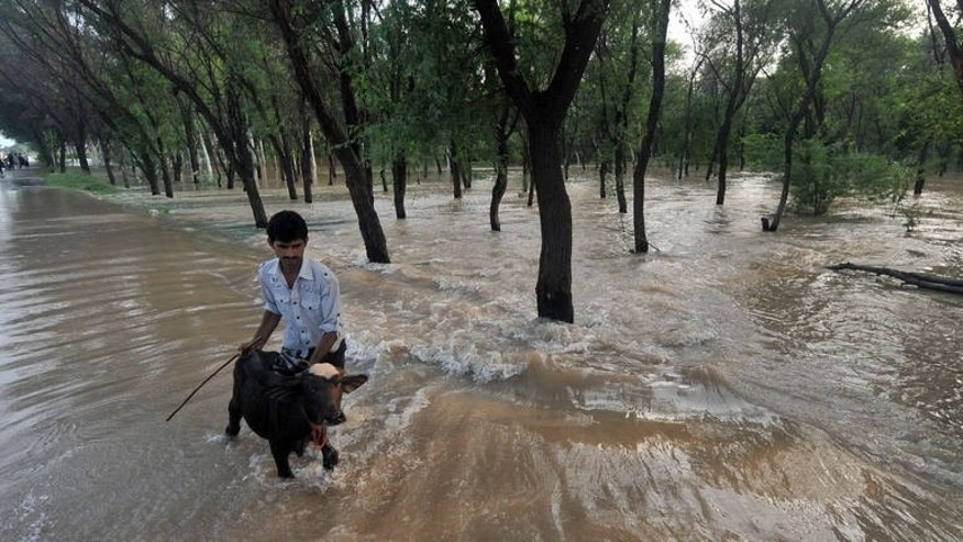 A Pakistani crosses a flooded street with a young buffalo in Muridke area near Lahore on August 19, 2013. Heavy monsoon rains triggering floods have affected nearly one million people and killed 139 others across Pakistan in the last three weeks, disaster management officials said Wednesday.