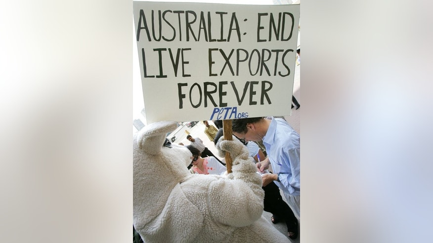 Animal rights activists campaign to make an Australian ban on the export of livestock permanent. South Africa's international live animal trade has come under fire for the brutal transport conditions, when the country has adequate slaughter facilities to give them a more humane death.