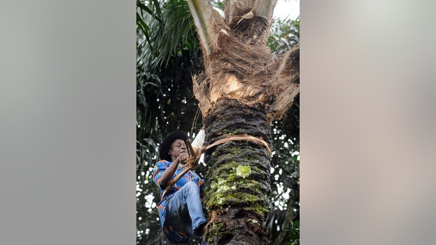 Palm wine tapper Anthony Ozioko climbs a palm tree in Eha-Alumona, southeastern Nigeria on August 8, 2013. The pay is low and the work involves scaling a 50-foot tree multiple times a day with no safety net, so it is not surprising that Nigerian palm wine tappers are struggling to find fresh recruits.