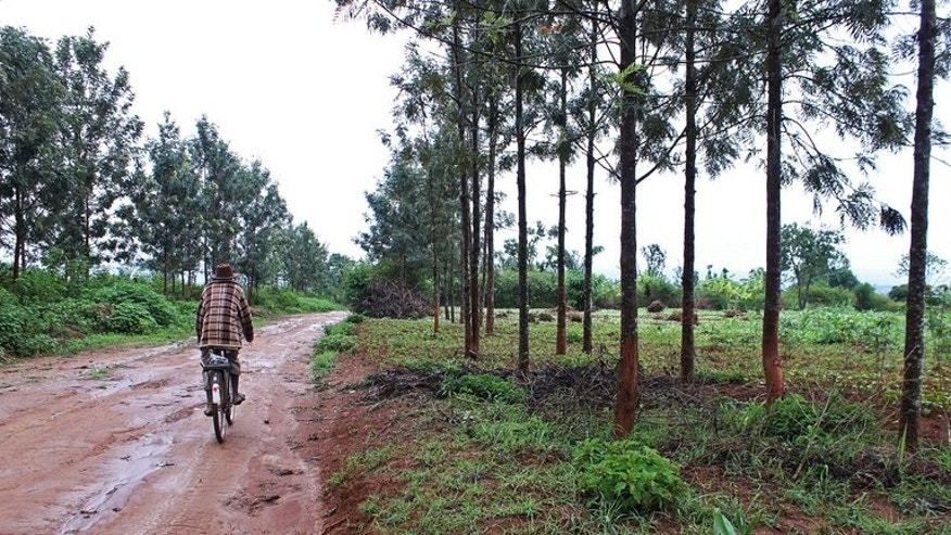 A road where the village of Gitagata, destroyed after the 1994 genocide, once stood, on November 13, 2012 in southern Rwanda.