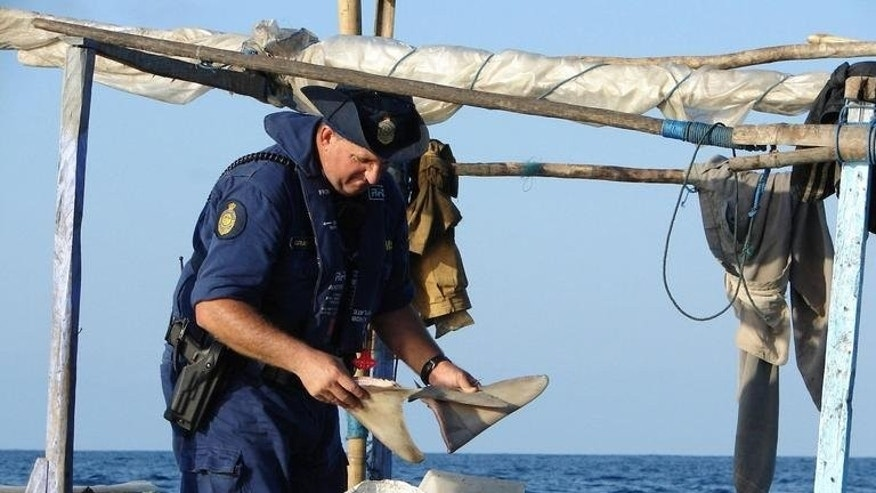 File photo of an Australian marine unit officer seizing shark fins from an illegal fishing vessel off the north coast.
