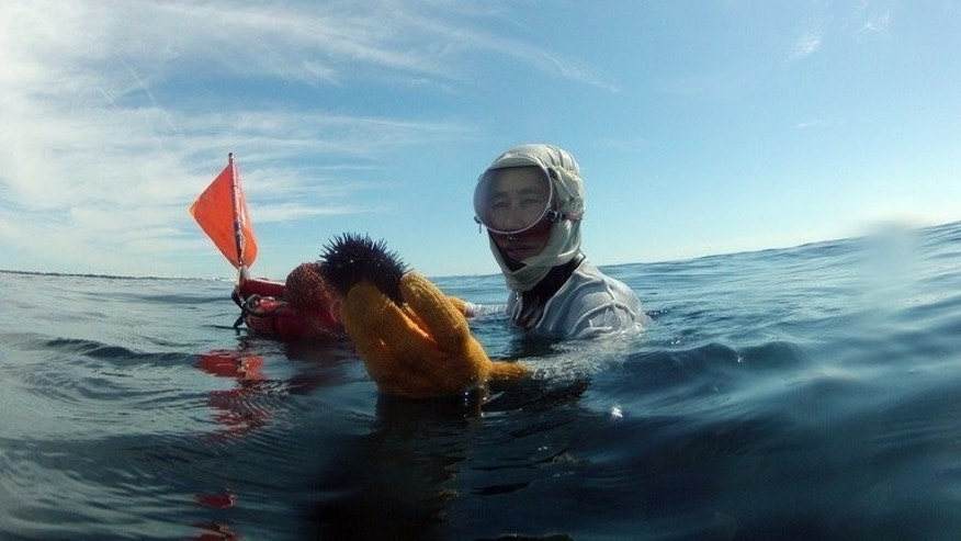 Hideko, a free diver, holds up a sea urchin she caught off the coast of Shima in Japan's Mie prefecture on September 6, 2013.