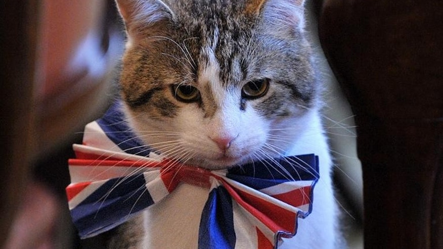 Larry, the 10 Downing Street cat, wears a British Union Jack bow tie ahead of the Downing Street street party, in London, on April 28, 2011