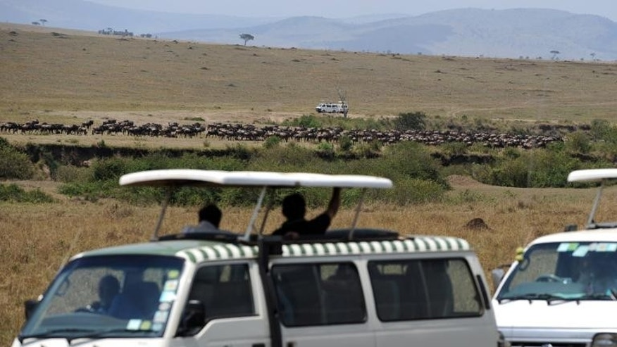 Tourists riding safari vehicles watch a herd of Wildebeest gather in a field during the annual wildebeest migration through the Massai Mara National park in western Kenya