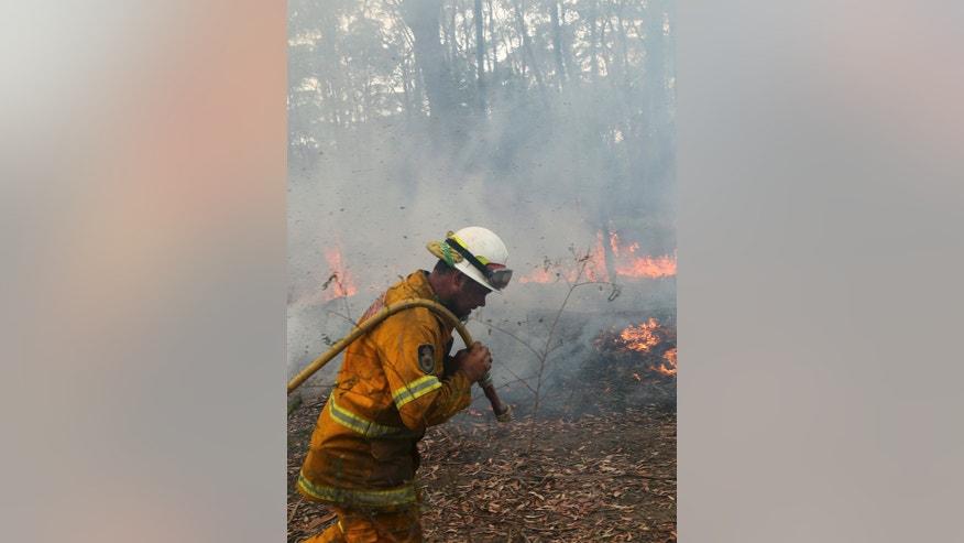 A firefighter pulls a hose through the bush as teams work to control flames near houses in Bilpin 75 kilometers (46 miles) west of  Sydney in  Australia,  Tuesday, Oct. 22, 2013. Authorities have warned that hotter weather and increased winds are expected and are preparing for the conditions to worsen. (AP Photo/Rob Griffith)