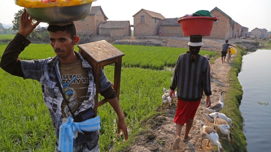 A man selling food stuff walks home, past  rice field's near the city of Antananarivo, Madagascar, Thursday, Oct. 24, 2013. Madagascar will hold elections on Friday that organizers hope will end political tensions that erupted in a 2009 coup and help lift the aid-dependent country out of poverty. The island nation in the Indian Ocean plunged into turmoil after Andry Rajoelina, the current president, forcibly took power from former President Marc Ravalomanana with the backing of the military.  (AP Photo/Schalk van Zuydam)