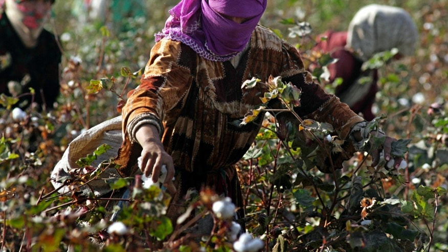 FILE - In this Friday Nov. 3, 2006 file photo Tajik girls harvest cotton in a field outside the town of Dosti in southern Tajikistan. While the Tajik economy, which depends on aluminum and cotton, has gradually recovered to its Soviet-era level and has been growing over the past few years, the country remains one of the poorest nations in the former Soviet Union. Tajikistan is holding a presidential election on Wednesday, Nov. 6, 2013. (AP Photo/Sergei Grits, File)
