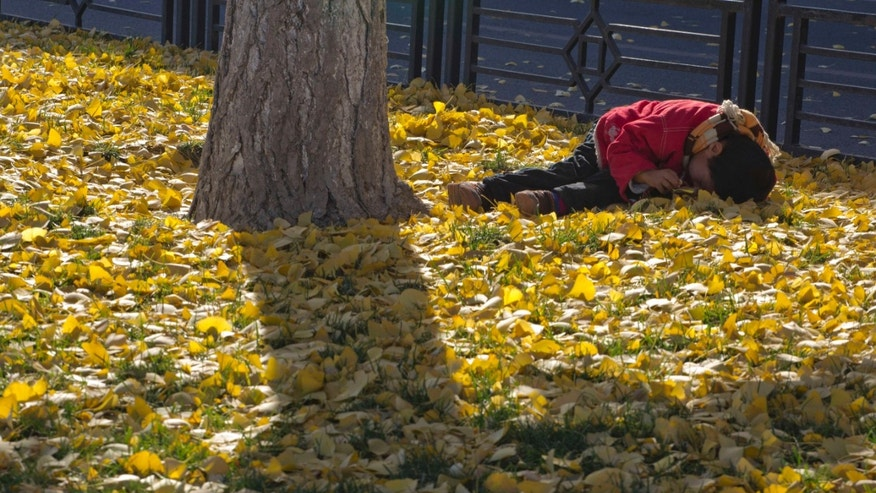 A chinese child lies on fallen autumn leaves in Beijing, China, Saturday, Nov. 16, 2013. Some 15 million to 20 million Chinese parents will be allowed to have a second baby after the Chinese government announced Friday, Nov. 15, 2013 that couples where one partner has no siblings can have two children, in the first significant easing of the country's strict one-child policy in nearly three decades.(AP Photo/Ng Han Guan)