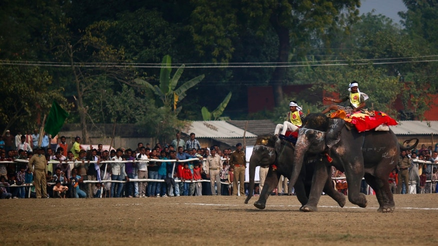 In this Monday, Nov. 25, 2013 photo, Elephants run a race at the elephant fair in Sonepur, India. Hoping there is something for everyone at this year's Sonepur Mela, organizers admit they are struggling to revive one of India's largest livestock markets now sapped of its main attraction by a ban on elephant sales. In decades past, the festival drew hundreds of elephants, and hundreds of thousands of people hoping to watch the animals revered in India as an Earthly incarnation of the Hindu god Ganesh bath in the river or do tricks for a crowd. (AP Photo/Saurabh Das)