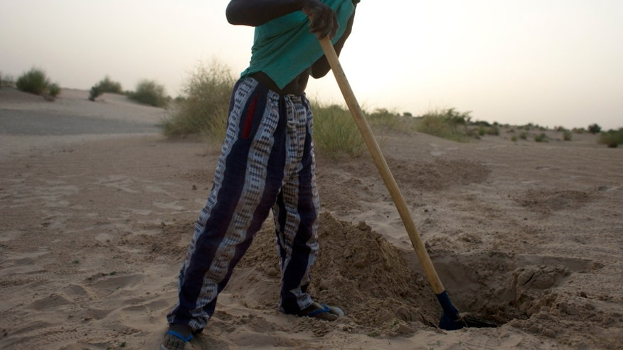 "In this July 23, 2013 photo, Sidi Fassoukoy, searching for his missing brother, covers his nose against the smell as he unearths the remains of two men buried in the desert outside Timbuktu, Mali. From the men's clothing, Fassoukoy was able to identify the bodies as those of his brother, Maouloud Fassoukoy, and their neighbor, ""Vieux"" Ali Ould Kabbad, a lifelong Arab resident of Timbuktu whom Maouloud was killed for defending. Mali's military has killed or taken away at least 35 civilians in 2013, many of them Arabs and Tuaregs, according to human rights groups. An AP investigation uncovered the remains of six of these men, whose families identified the bodies and said they were last seen being taken away by Malian soldiers. (AP Photo/Rebecca Blackwell)"
