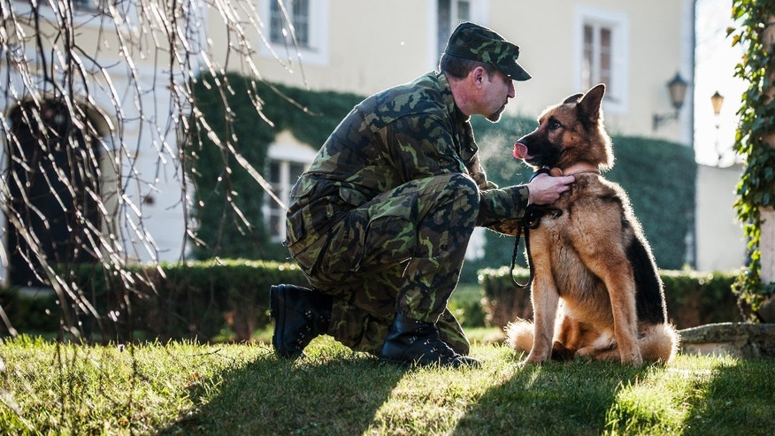 Four-year-old Czech military dog Athos who was seriously wounded  in a Taliban rocket attack in Afghanistan in 2012 sits with dog handler Rostislav Bartoncik after being decorated by Czech Defence Minister Vlastimil Picek in Chotyne, Czech Republic,Tuesday, Jan. 7, 2014.  Suffering life threatening injuries, Athos was first treated by U.S. military doctors in Afghanistan before he was transported to the U.S. Ramstein base in Germany.  (AP Photo/CTK, Radek Petrasek) SLOVAKIA OUT