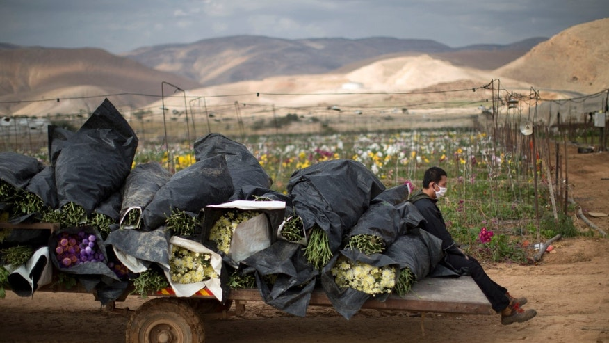 In this Thursday, Jan. 9, 2014 photo, a Thai worker sits in a back of a truck load with flowers in the fields of the West Bank Jordan Valley Jewish settlement of Petsael. For Israeli farmers in the West Bank's Jordan Valley, an international campaign to boycott settlement products has turned almost overnight from a distant nuisance into a harsh economic reality. The export-driven income of growers in the valley's 21 settlements dropped by 15 percent, or $29 million dollars, last year because Western European supermarket chains trying to avoid political entanglements largely stopped buying the valley's grapes, dates and sweet peppers. (AP Photo/Oded Balilty)