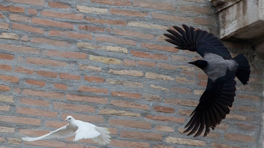 """In this picture taken Sunday, Jan. 26, 2014, a dove which was freed by children with Pope Francis during his Angelus prayer, is attacked by a black crow in St. Peter's Square, at the Vatican. Animal rights groups are appealing to Pope Francis to end a practice of releasing doves over St. Peter's Square, a day after a pair of the peace symbols were attacked by a seagull and crow. The National Animal Protection Agency published an open letter Monday reminding Francis that domesticated doves are easy prey for predators like gulls living in the wild. Gulls nest atop the colonnade of St. Peter's Square, far from natural seaside habitats, but scavenge garbage for food in Rome. The agency said freeing doves in Rome is like """"condemning them to certain death."""" Pro-animal advocate and ex-tourism minister Michela Brambilla told The AP she was confident, Francis, with his """"extraordinary love"""" for all creatures, would reconsider. The Vatican didn't immediately comment on the dove attack. (AP Photo/Gregorio Borgia)"""