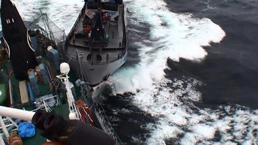 February 2, 2014: In this photo provided by the Institute of Cetacean Research, Japanese whaling vessel Yuhsin Maru No. 3, left, and Sea Shepherd's the Bob Barker' collide in the remote, icy seas off Antarctica. No one was injured, though both ships received minor damage in the Sunday's collision - the latest drama in an annual battle between the conservationists and the whalers. Both sides are blaming each other for the crash. (AP Photo/The Institute of Cetacean Research)