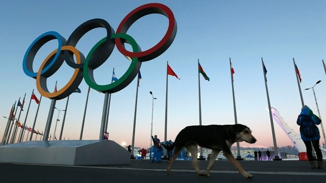 Russian billionaire's dog shelter offers Sochi strays a second chance