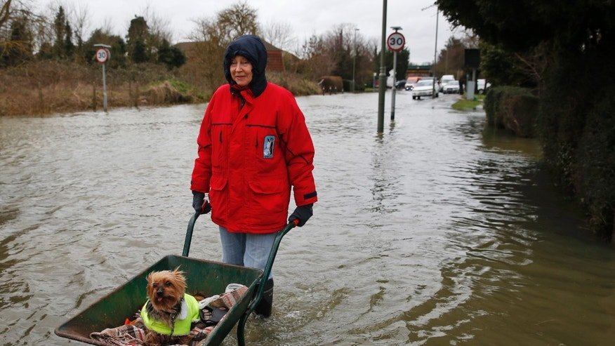 "Celia, last name not given, a local resident pushes her dog in a wheelbarrow, in the flooded part of the town of Staines-upon-Thames, England, Wednesday, Feb. 12, 2014. Prime Minister DavidCameron insisted Tuesday that money is no object in the battle against the widespread flooding that has engulfed parts of England. Canceling a visit to the Middle East to oversee flood-fighting efforts, he told journalists that ""whatever money is needed for this relief effort will be spent"" as Britain deals with some of its wettest weather in 250 years. (AP Photo/Lefteris Pitarakis)"