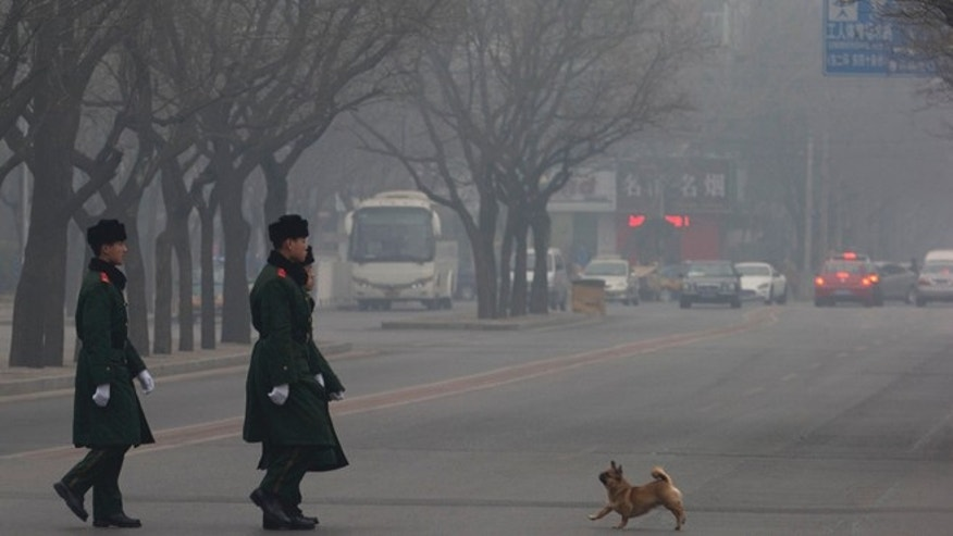 Feb. 20, 2014: A dog encounters Chinese paramilitary policemen on duty as they cross a street during a hazy day in Beijing, China.