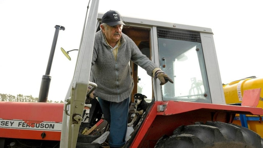 "FILE - In this Oct. 25, 2009, file photo Uruguay's President Jose Mujica, 74, stands in a tractor on his flower farm on the outskirts of Montevideo, Uruguay, Sunday. While outside his country he is an international figure, well known for his modest lifestyle, consistent with his ideals and his good-nature, among his own people Uruguay's  President known as ""Pepe"" does not generate such devotion and many question his management. (AP Photo/Matilde Campodonico, File)"