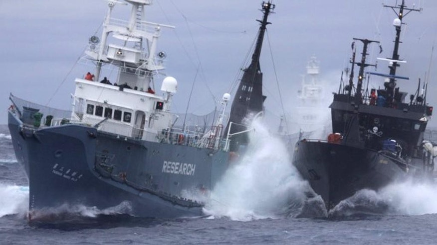 FILE - In this Feb. 6, 2010 file photo released by the Institute of Cetacean Research of Japan, anti-whaling group Sea Shepherd's ship the Bob Barker, right, and the Japanese whaling ship No. 3 Yushin Maru collide in the waters of Antarctica. The international court ruling against Japanese whaling last week may have given the government a convenient political out. In a March 31, 2014 ruling, the International Court of Justice ordered Japan to stop granting permits for its Antarctic whaling program, which allowed an annual cull of about 1,000 whales. (AP Photo/Institute of Cetacean Research, File) EDITORIAL USE ONLY