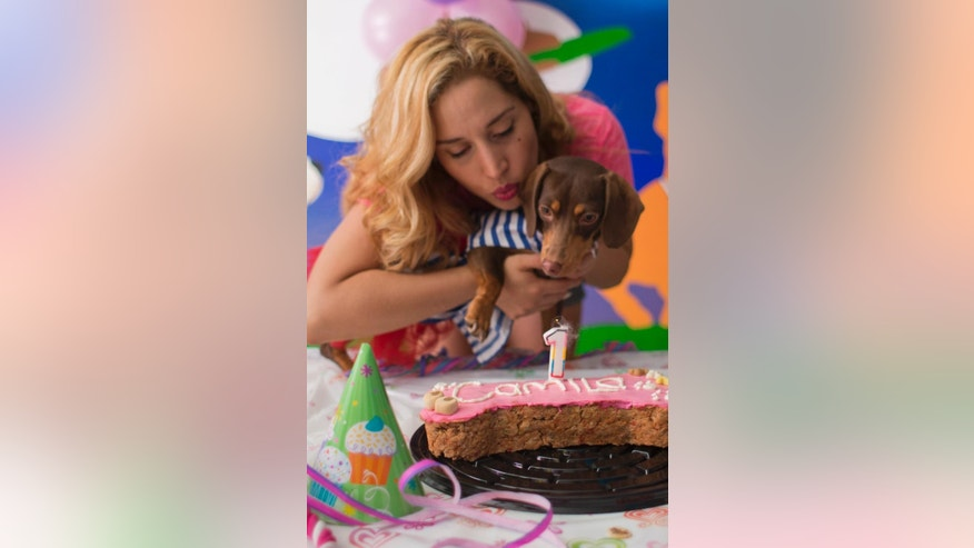 In this Sunday, April 6, 2014 photo, Valery Palma blows out the candle on a bone-shaped dog friendly cake for her one-year-old dachshund Camila, in Mexico City, Mexico. Palma, who has two dogs, spent $300 on the birthday party for 11 canines and 16 people, complete with cake, presents and snacks, at a dog hotel featuring a gym and massage and aromatherapy services. (AP Photo/Rebecca Blackwell)