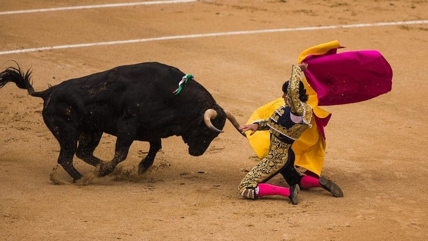 Spanish bullfighter David Mora is tossed by a El Ventorrillo ranch fighting bull during a bullfight at Las Ventas bullring in Madrid, Spain, Tuesday, May 20, 2014. Bullfighting is a traditional spectacle in Spain and the season runs from March to October. (AP Photo/Andres Kudacki)