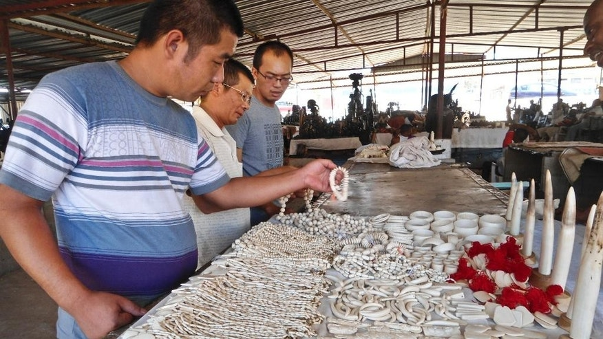 In this photo taken Sunday, March 2, 2014 and provided by Lucy Vigne, Chinese visitors look at souvenirs made of ivory for sale at the Benfica market on the outskirts of Luanda, Angola. The market on the outskirts of Angola's capital sells more than 10,000 pieces of ivory, making it the largest market in southern Africa to openly sell illegal elephant tusks, according to two researchers who traveled to Luanda and surveyed the items of ivory for sale, seeking to raise awareness of the dangers the ivory trade poses to the existence of Africa's elephants. (AP Photo/Lucy Vigne)