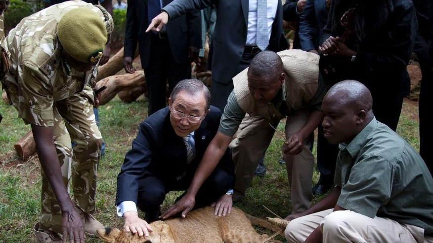 United Nations Secretary General Ban Ki-moon, second left, pets a lion cub assisted by Kenya Wildlife officials, which he adopted giving the name Tumaini (Hope) during his visit to the Nairobi Orphanage in Nairobi, Kenya, Saturday, June 28, 2014, at the end of the UN Environment Assembly.  (AP Photo/Sayyid Azim, pool)